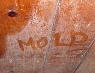 mold damage remediation and removal Texas
